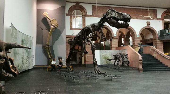 ゼンケンベルク自然史博物館 館内