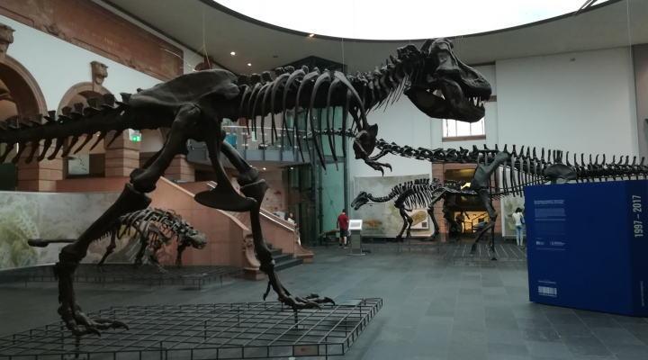 ゼンケンベルク自然史博物館 恐竜部屋