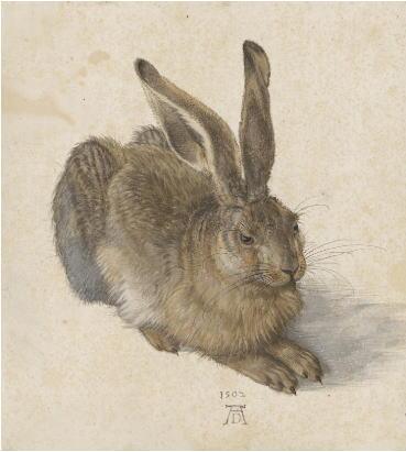 アルブレヒト・デューラー「野兎」